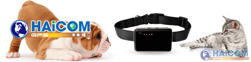 haicom-gps-in-animals-pets-mascotas-animales-perros-gatos